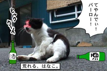 Osake1