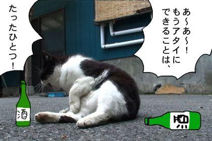 Osake3