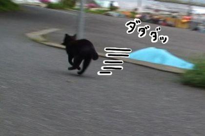 Obon04_3