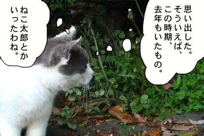Obon23_2