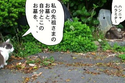 Obon24