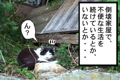 Doujyouneko02_2