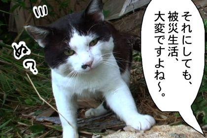 Doujyouneko05