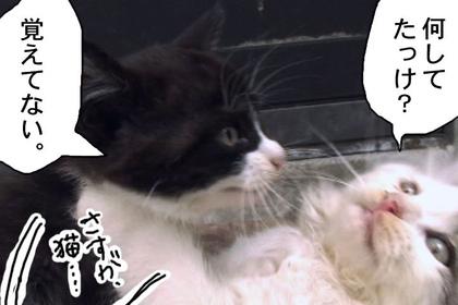Sasuga008_2