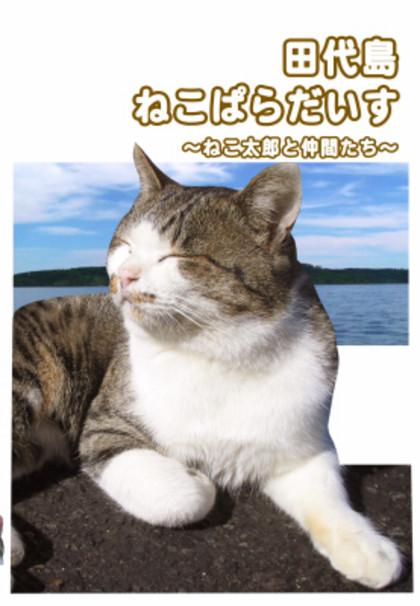 Tashiro001