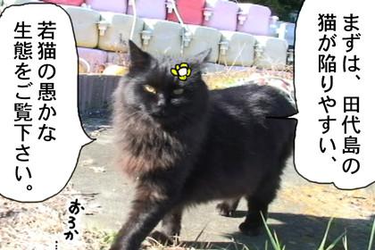Seitai302_2