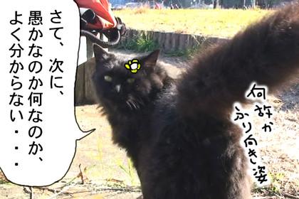 Seitai311_2
