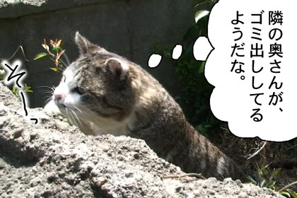 Gomi002_2