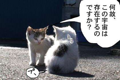 Kotaro006