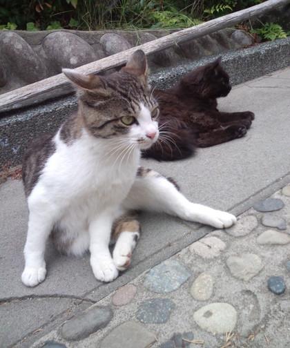 Jyuniakuroe_4