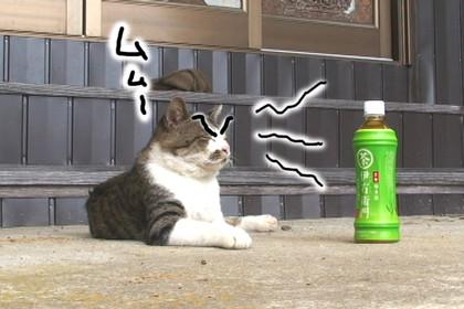 Daigo012