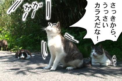 Karasu002_4