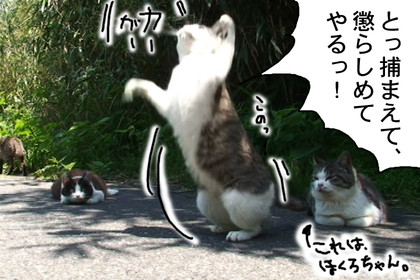Karasu003_4