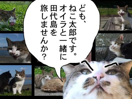 Tashiropr640480_3