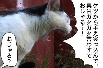 Ojyaru008_2