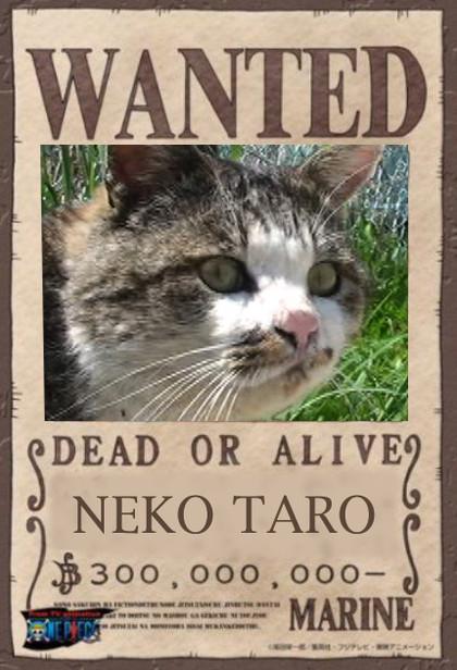 Wantedtaro